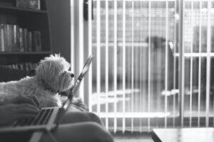 Dog on laptop B&w